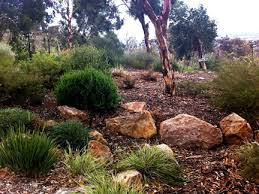 Small Picture Landscaping with local plants WILD ABOUT GARDENS Garden