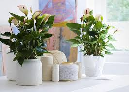 View in gallery Tropical plants in white pots