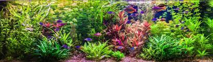 How To Adjust The Ph In Your Aquarium