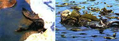 Загрязнение природы материков и океанов Биология Реферат  Вследствие загрязнения вод океанов гибнут животные
