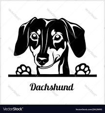 Dog head dachshund breed black and ...