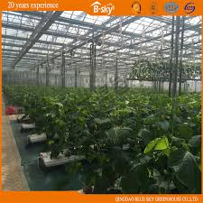 china high cost performance glass greenhouse for agricultural planting china greenhouse green house