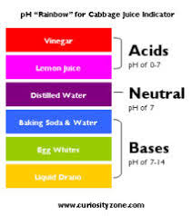 Red Cabbage Juice Indicator Chart Ph South Hill School Grade 5 2019 20