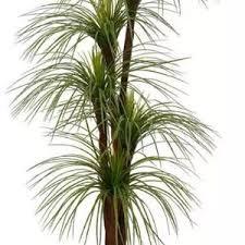 Confira as ofertas que a magalu separou para você. Flores E Plantas Artificiais Precos Imperdiveis Leroy Merlin