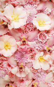 Pink Orchids Vintage Wallpaper iPhone ...