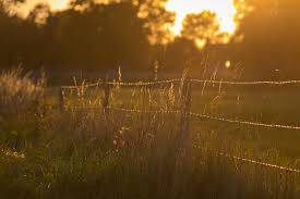 grass field at night. Wallpaper : Sunlight, Sunset, Night, Nature, Reflection, Field, Branch, Sunrise, Evening, Morning, Mist, Sun, Fence, Dusk, Light, Tree, Autumn, Leaf, Grass Field At Night