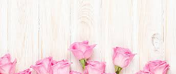 pink background pink rose flowers background image