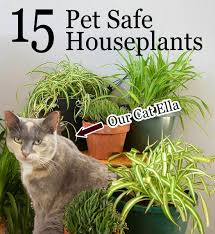 15 Pet Friendly Houseplants