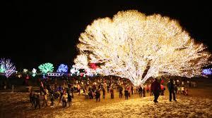 Draper Lights Tree Of Life