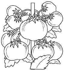 Kleurplaat Keuken Koken Eten Tomaat