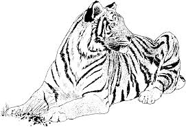 Small Picture Tigers Coloring Pages Free Coloring Pages Coloring Coloring Pages