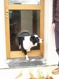 electronic dog doors. Medium Electromagnetic Dog Door Unique House Olympus Digital Camera Electronic Doors