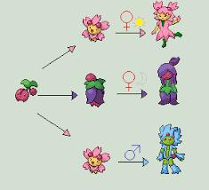 Pokemon Cherrim Evolution Chart Images Of Cherubi Evolution Chart Www Industrious Info