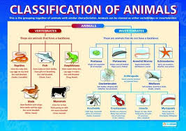 Animal Classification Chart Diagram Of Animal Classification Vertebrate And