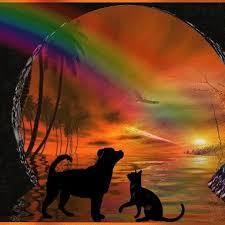 Gedenkseite Für Verstorbene Haustiere Startseite Facebook