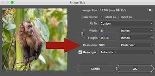 Megapixels How Big Can You Really Print A Photo Nature Ttl
