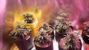 diy adjule 500 watt led grow light do it yourself grow light