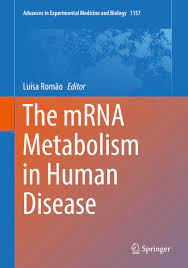 The mRNA Metabolism in Human Disease (Advances in Experimental Medicine and  Biology Book 1157) 1st ed. 2019, Romão, Luísa - Amazon.com