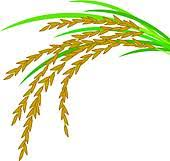 rice plant clipart. Fine Clipart Rice Design On White Background On Plant Clipart O