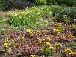 Small Picture Pollinator Garden Design Wild Bee Garden Design