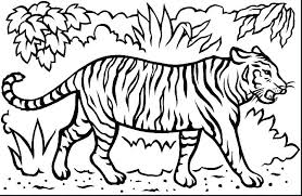 Tiger Coloring Pages Tigers Coloring Pages Coloring Pages Tiger Cubs