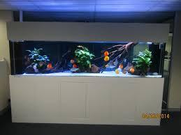 office aquarium. Custom Office Discus Aquarium D