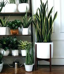 modern outdoor plants architectures modern outdoor planter pots architectures modern home outdoor plants modern outdoor plants uk