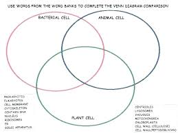 Comparing Plant And Animal Cells Venn Diagram Answers Venn Diagrams Worksheets Ks2 Slaterengineering Com