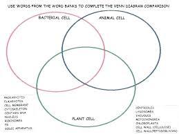 Bacteria Animal And Plant Cell Venn Diagram Venn Diagrams Worksheets Ks2 Slaterengineering Com