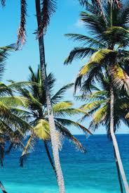 palm trees tumblr vertical. Adventure Barbados Beach Beautiful Blue Bluesky Explore Green Landscape Memories Nature Ocean Paradise Palm Trees Plantlife Tumblr Vertical