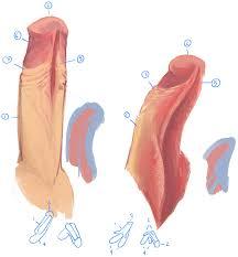 Hentai clit turns into penis