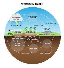 Nitrogen Cycle Steps Process Explanation Diagram