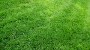 grass texture hd. 1920x1080 Wallpaper Texture, Grass, Field, Green Grass Texture Hd WallpapersCraft