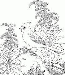 Small Picture Realistic Nature Coloring Pages Coloring Page Pedia Coloring