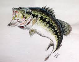 largemouth bass art largemouth bass fish paintingswildlife