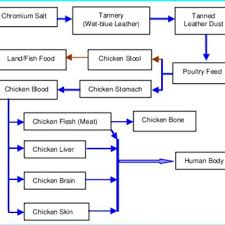 Poultry Feed Chart Farming Of Chickens Using Chromium Contaminated Poultry Feed