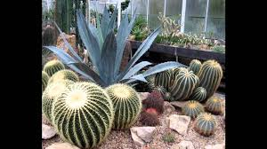 Small Picture Creative Cactus garden design decorating ideas YouTube