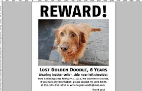 lost and found flyers lost pet posters oyle kalakaari co