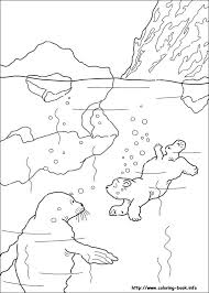 Small Picture Polar Animal Coloring Pages Print Coloring Polar Animal Coloring