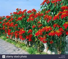 Natur Pflanzenwelt Pflanze Blume Bluete