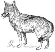 Small Picture North American Wildlife Coloring Pages Free Coyote Coloring