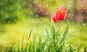 most beautiful flowers to grow in rainy