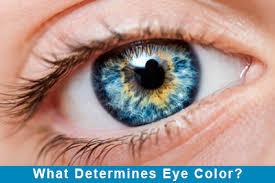 ผลการค้นหารูปภาพสำหรับ eye color
