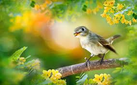 Bird Scientific Name Acrocephalus ...