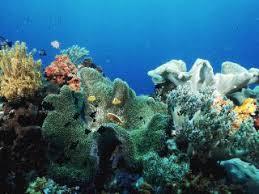 Barrier Reef Coat Rack Newsletter Coral Reef Conservation 85