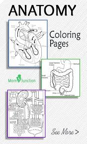 Small Picture Best 20 Apologia anatomy ideas on Pinterest Free child place