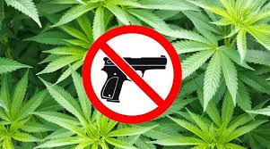 Image result for gun and marijuana