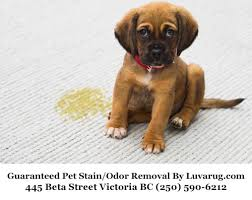 luv a rug services inc guarantees complete pet stain odor removal from all types of area rugs whether they are modern designer rugs or precious oriental