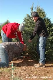 5 Local Chopyourown Christmas Tree Farms  PhillyVoiceChristmas Tree Cutting Nj