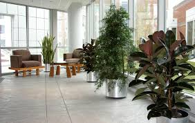 interior landscaping office. Interior Landscaping Plants In Lobby Of Reading Co-operative Bank Office I